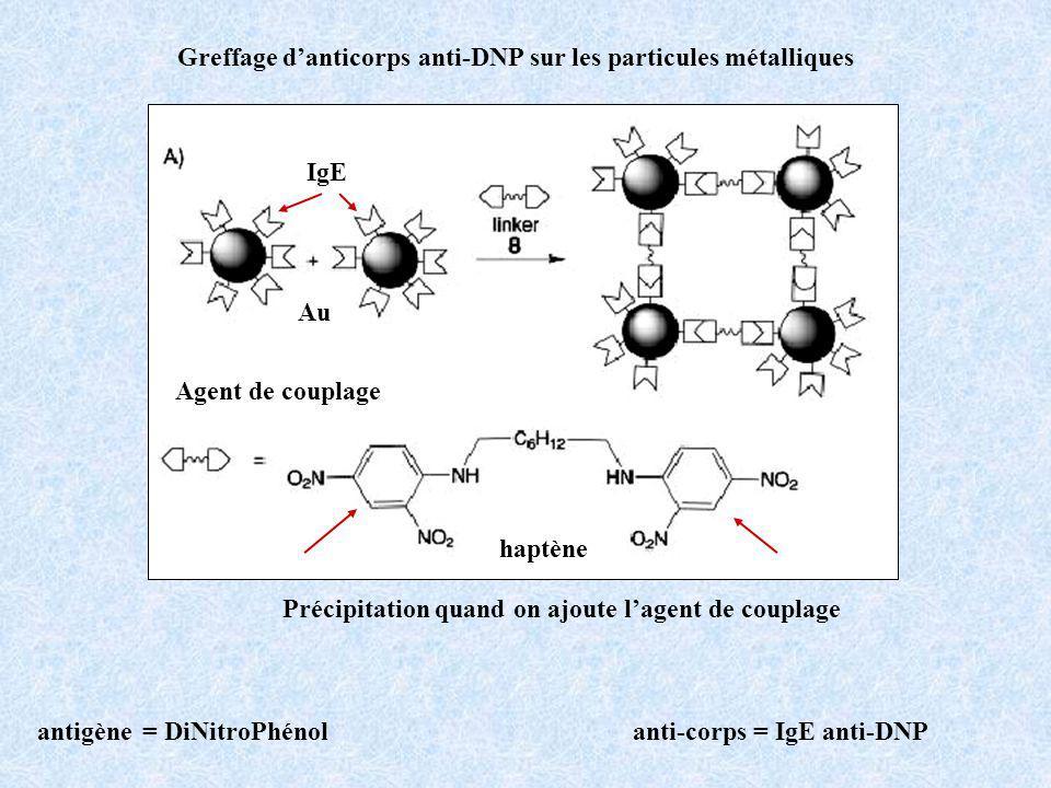 Greffage d'anticorps anti-DNP sur les particules métalliques