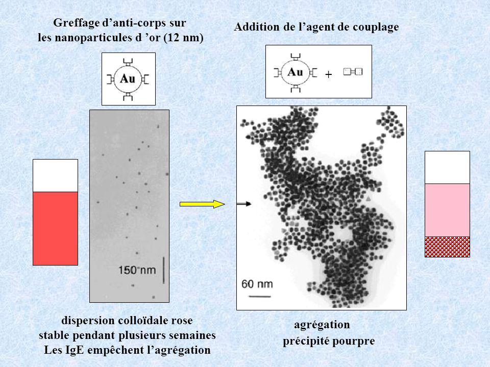 Greffage d'anti-corps sur les nanoparticules d 'or (12 nm)