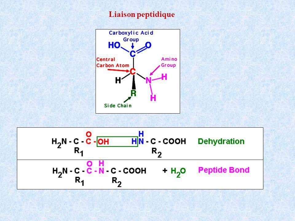 Liaison peptidique