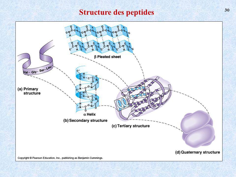 Structure des peptides