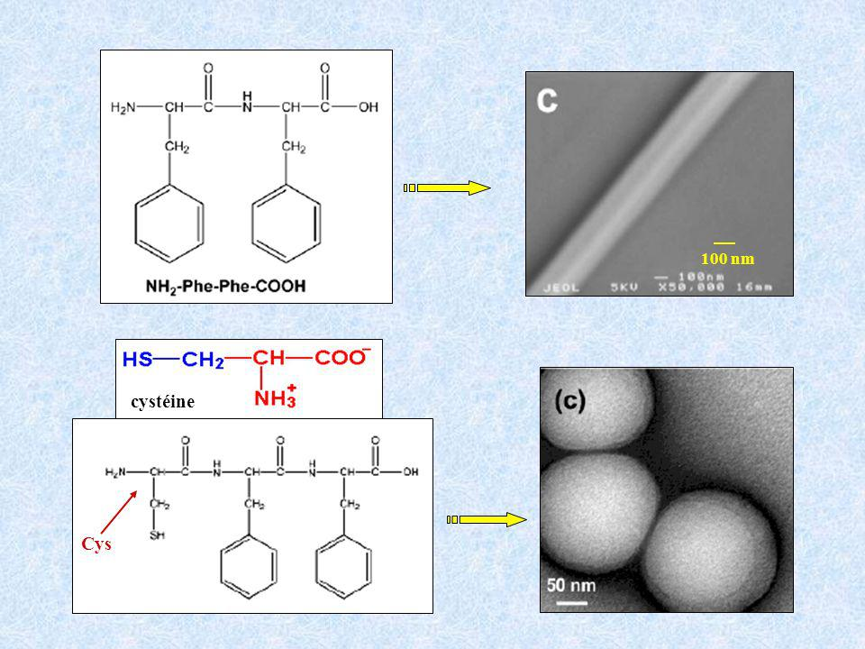 100 nm cystéine Cys