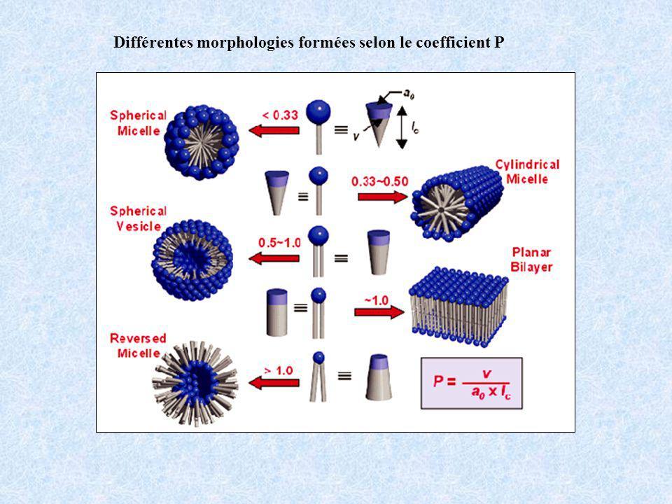 Différentes morphologies formées selon le coefficient P