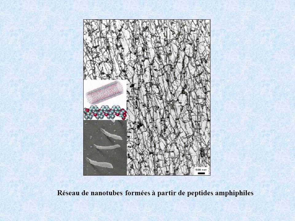 Réseau de nanotubes formées à partir de peptides amphiphiles