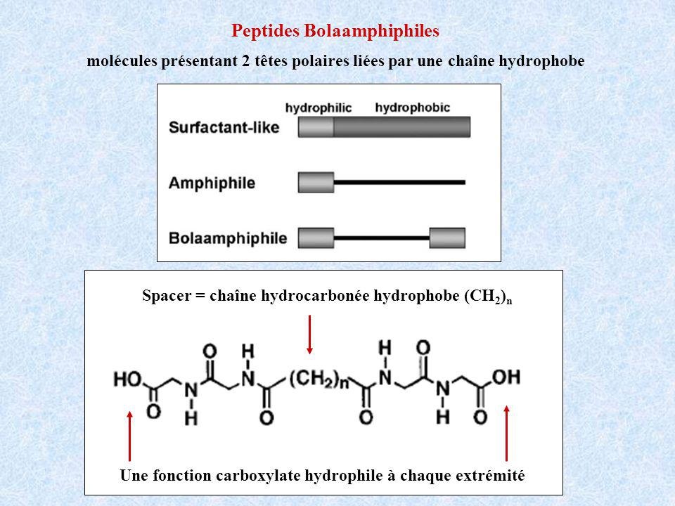 Peptides Bolaamphiphiles