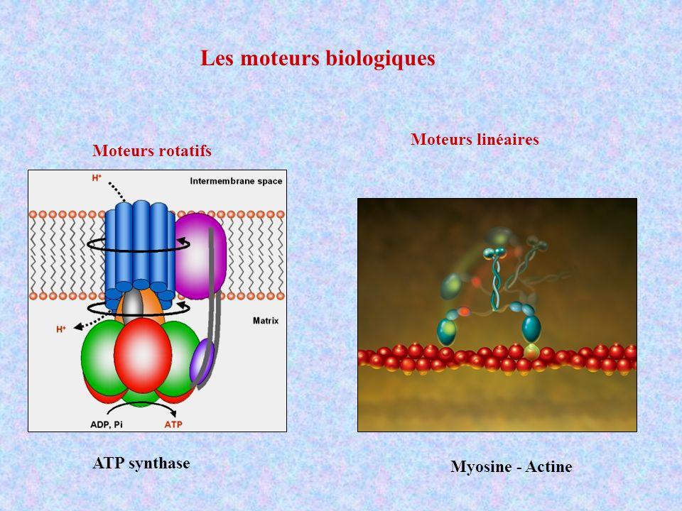 Les moteurs biologiques