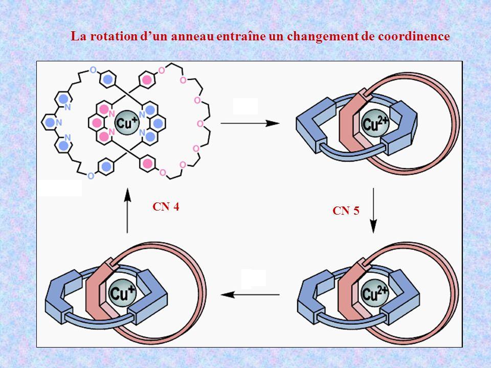 La rotation d'un anneau entraîne un changement de coordinence