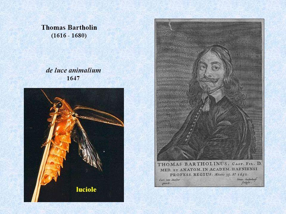 Thomas Bartholin de luce animalium
