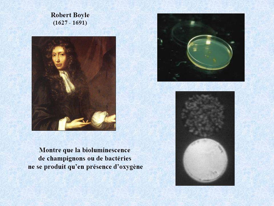 Montre que la bioluminescence de champignons ou de bactéries