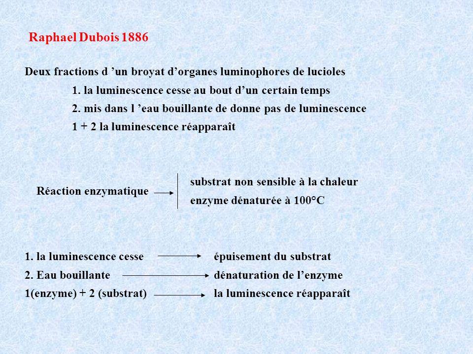 Raphael Dubois 1886 Deux fractions d 'un broyat d'organes luminophores de lucioles. 1. la luminescence cesse au bout d'un certain temps.
