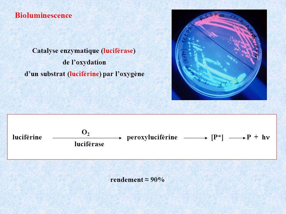 Bioluminescence Catalyse enzymatique (luciférase) de l'oxydation