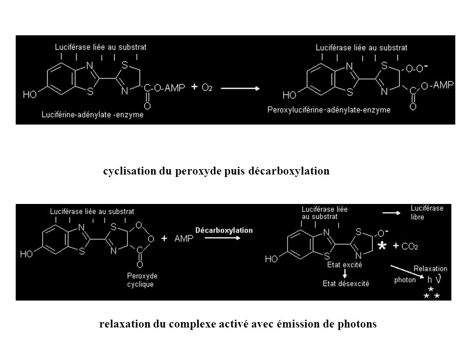 cyclisation du peroxyde puis décarboxylation