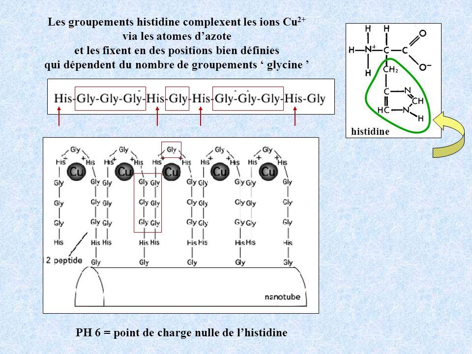 Les groupements histidine complexent les ions Cu2+