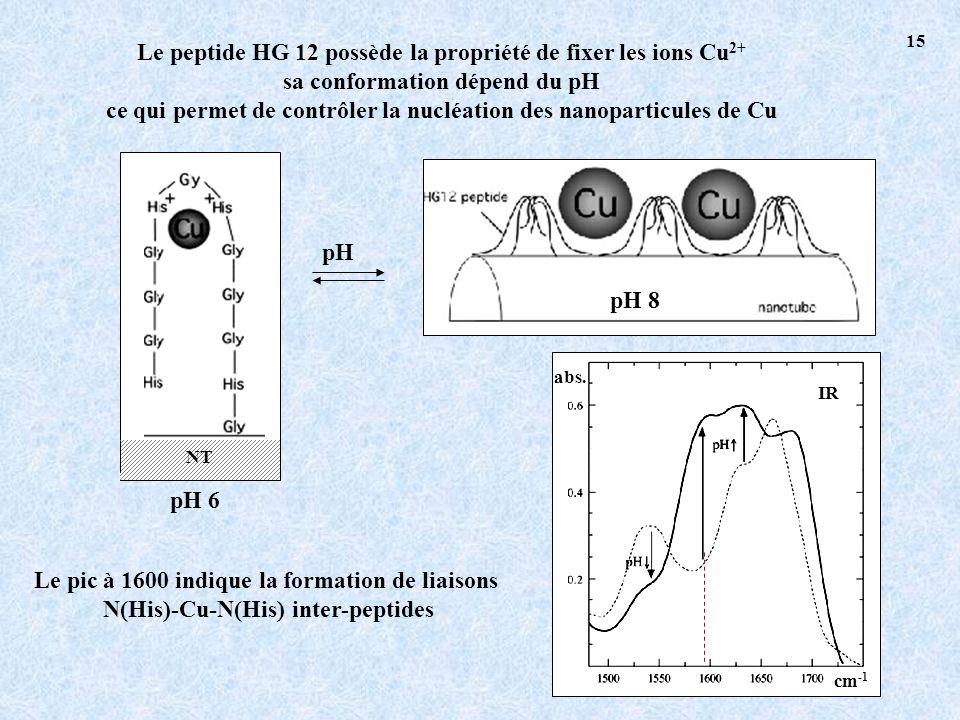 Le peptide HG 12 possède la propriété de fixer les ions Cu2+