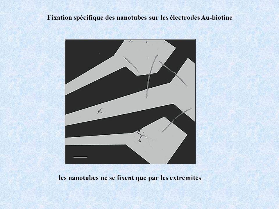 Fixation spécifique des nanotubes sur les électrodes Au-biotine