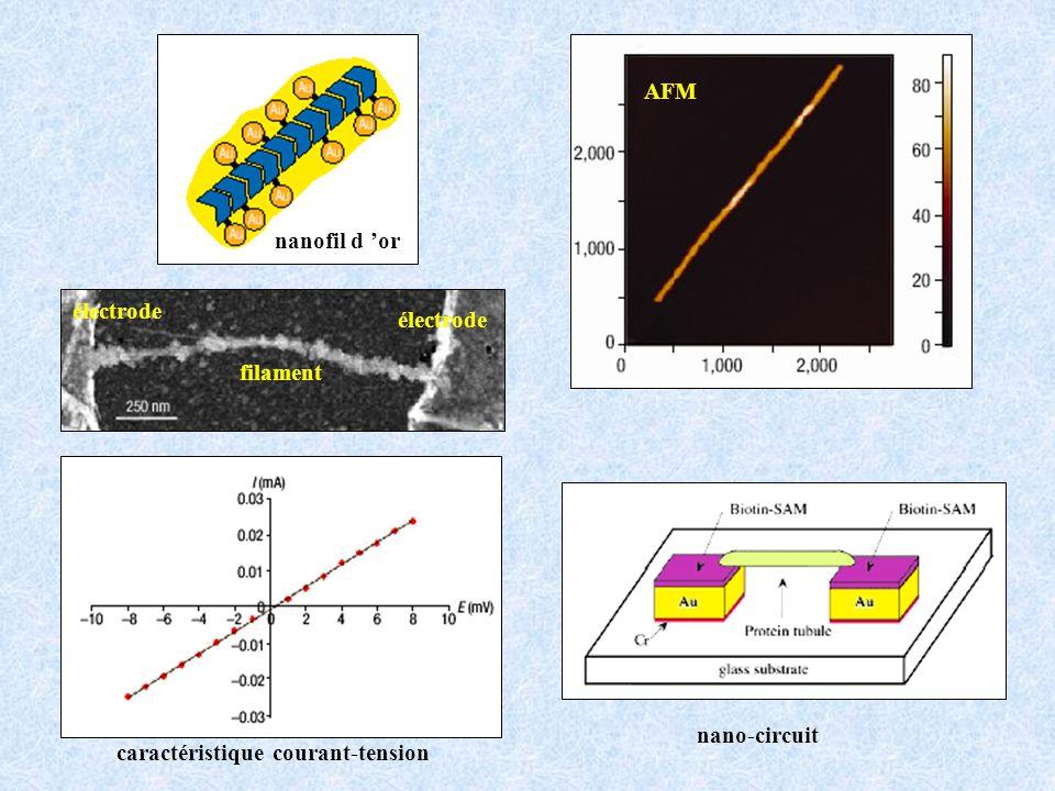 AFM nanofil d 'or électrode filament nano-circuit caractéristique courant-tension