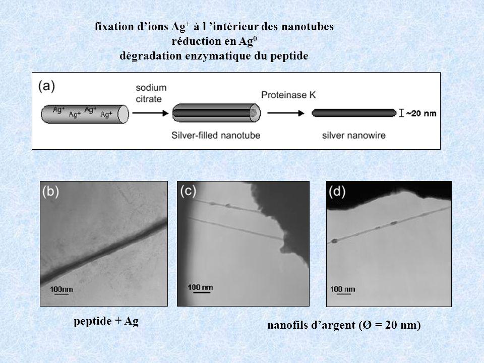 fixation d'ions Ag+ à l 'intérieur des nanotubes réduction en Ag0