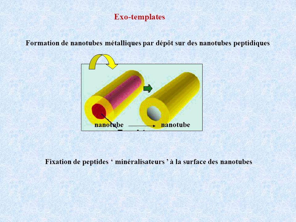Exo-templates Formation de nanotubes métalliques par dépôt sur des nanotubes peptidiques. nanotube nanotube.