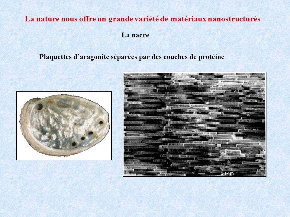 La nature nous offre un grande variété de matériaux nanostructurés