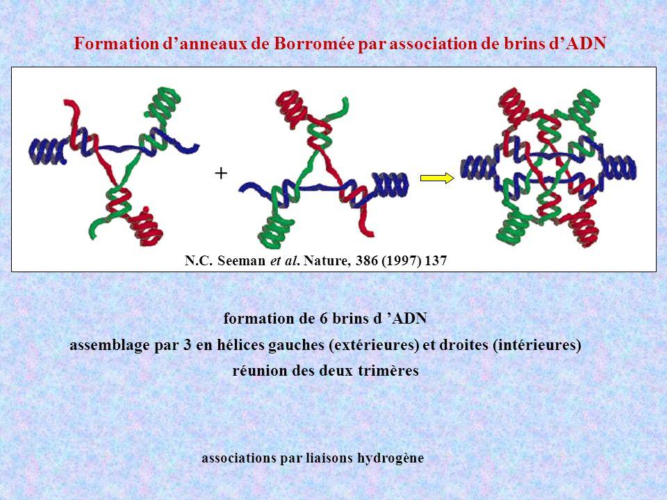 formation de 6 brins d 'ADN réunion des deux trimères