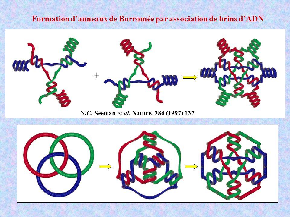 + Formation d'anneaux de Borromée par association de brins d'ADN