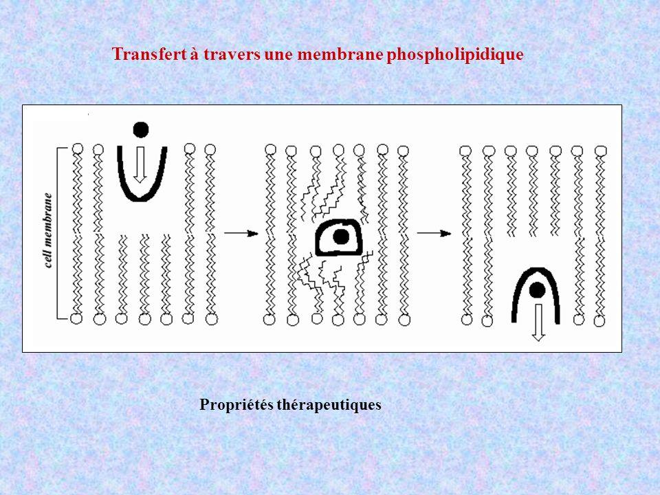 Transfert à travers une membrane phospholipidique