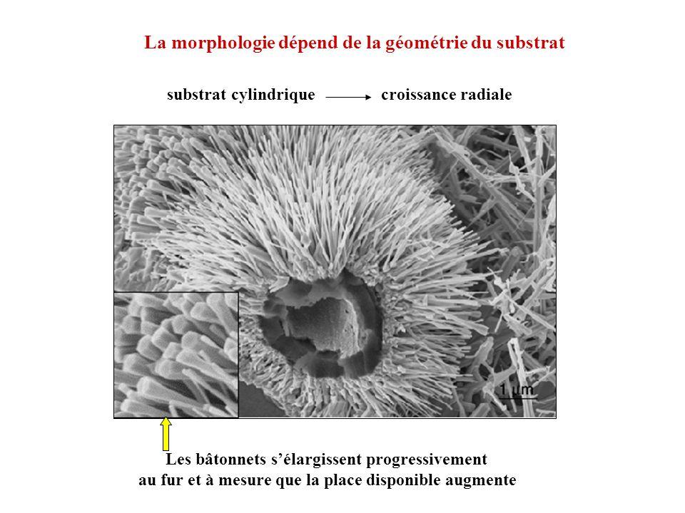 La morphologie dépend de la géométrie du substrat