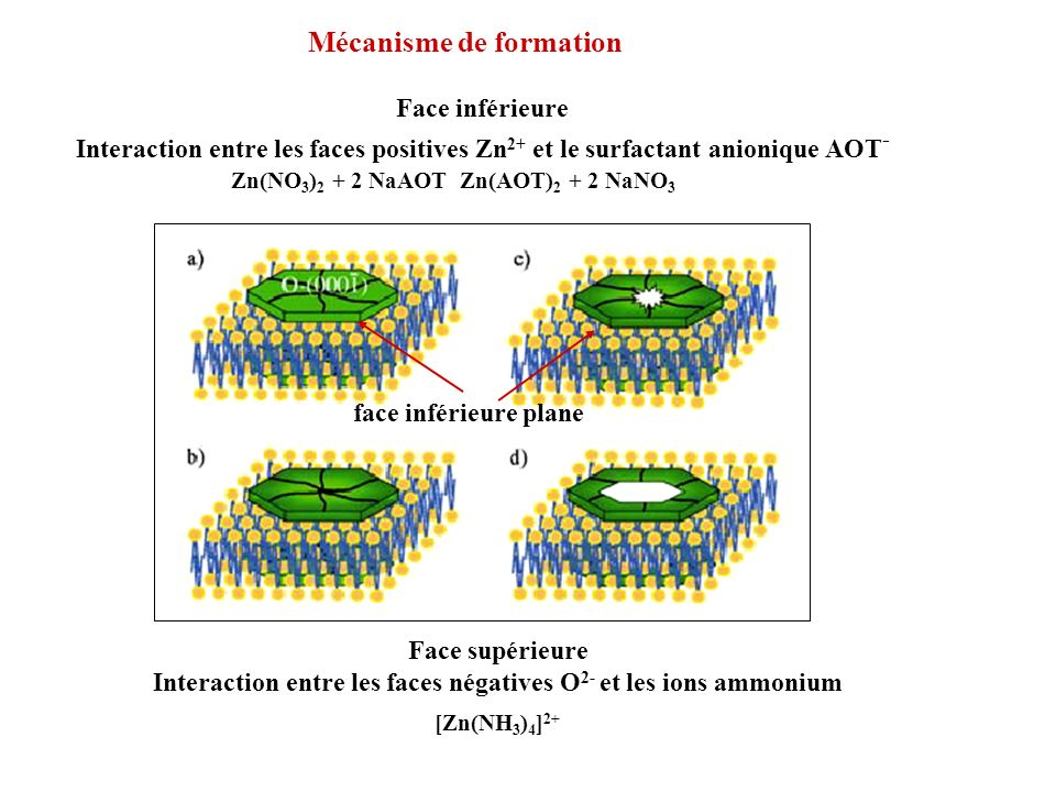 Interaction entre les faces négatives O2- et les ions ammonium