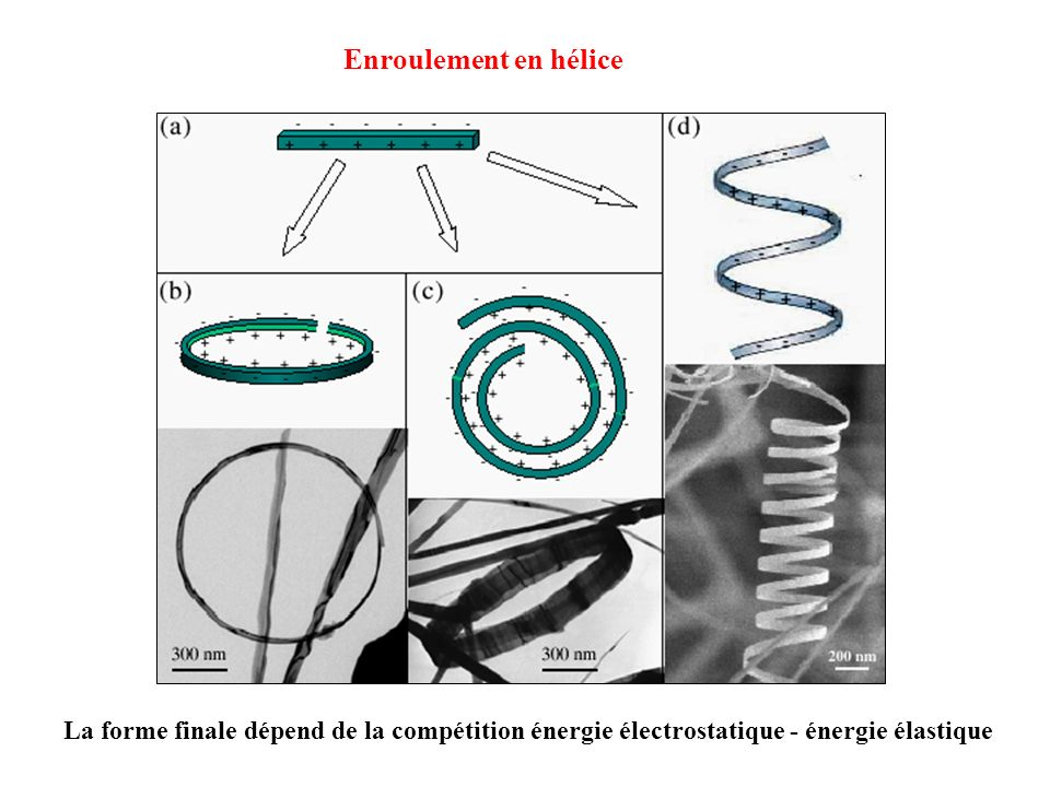 Enroulement en hélice La forme finale dépend de la compétition énergie électrostatique - énergie élastique.
