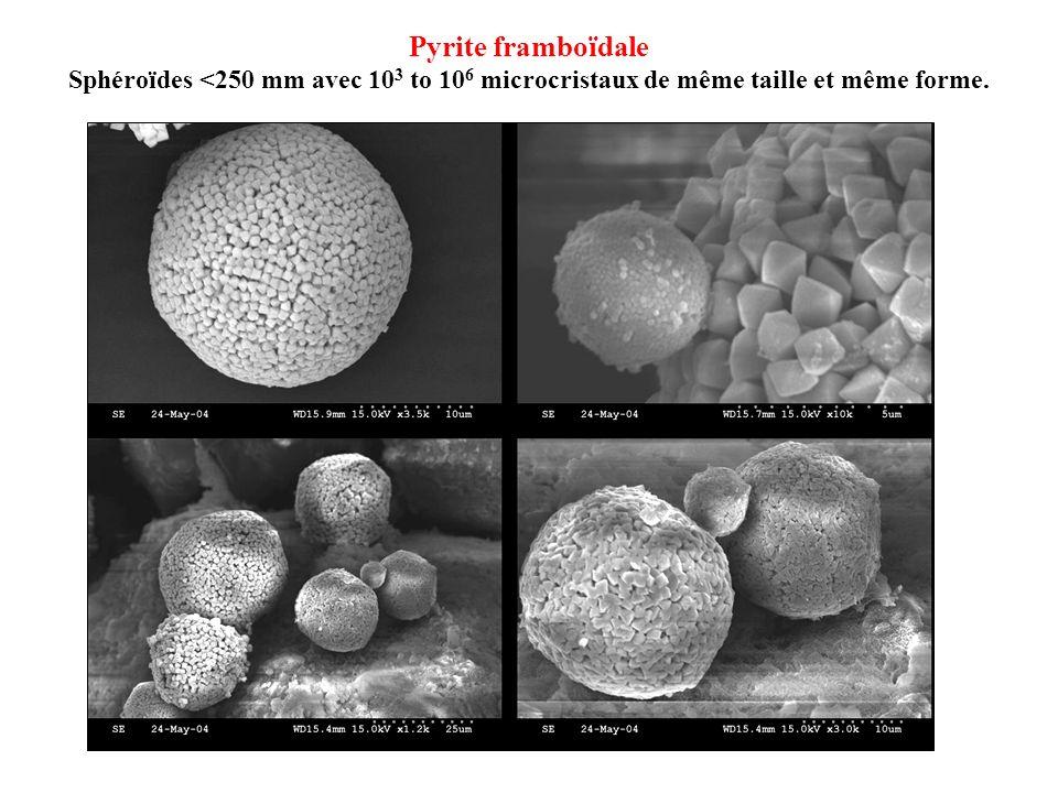 Pyrite framboïdale Sphéroïdes <250 mm avec 103 to 106 microcristaux de même taille et même forme.