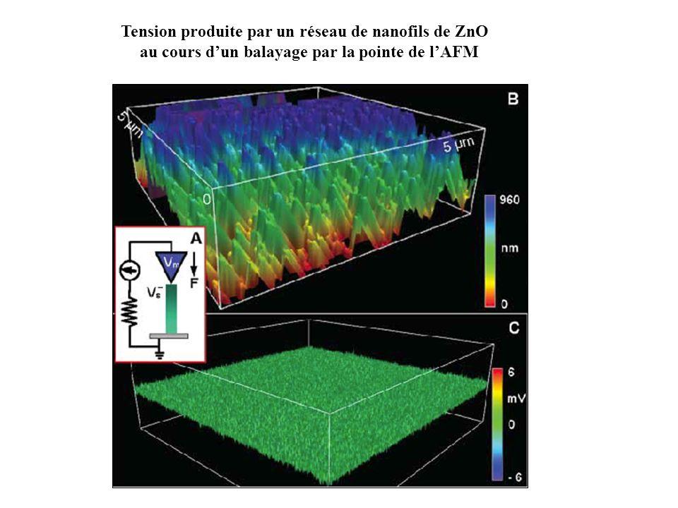 Tension produite par un réseau de nanofils de ZnO