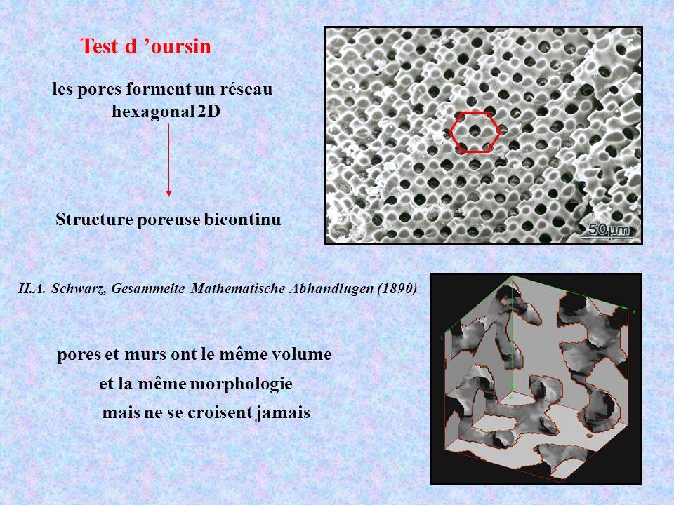 Test d 'oursin les pores forment un réseau hexagonal 2D
