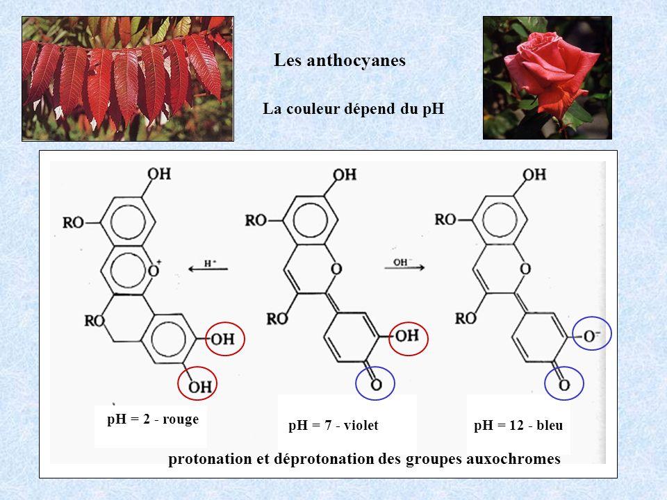 Les anthocyanes La couleur dépend du pH