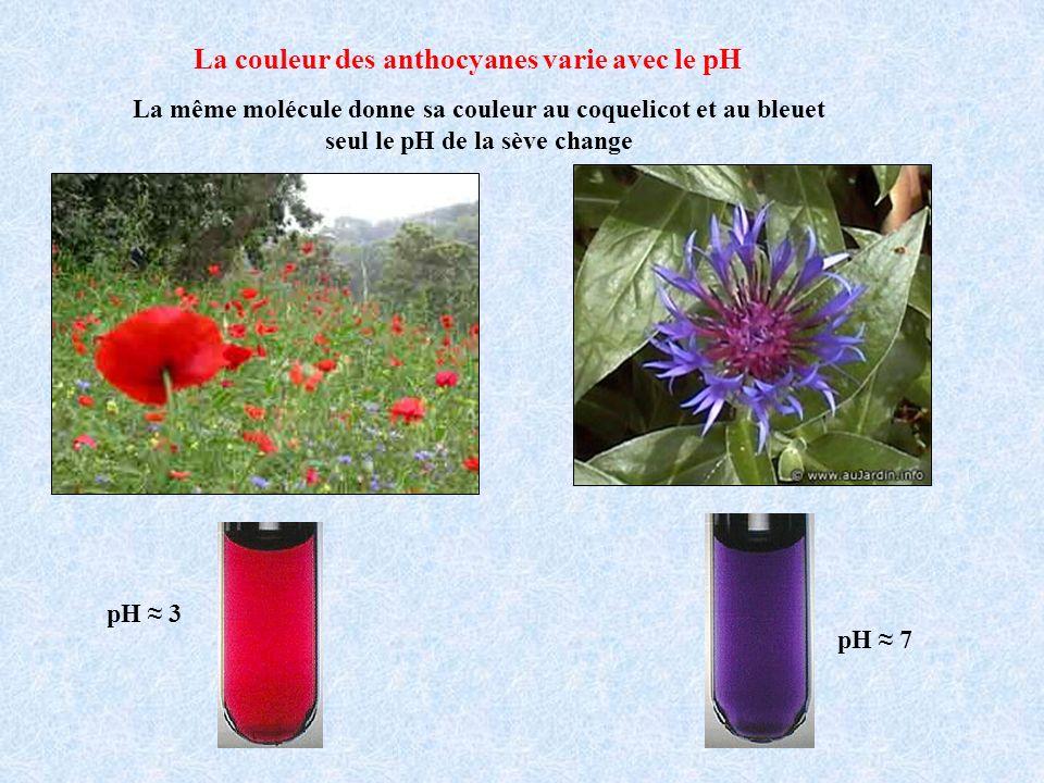 La couleur des anthocyanes varie avec le pH