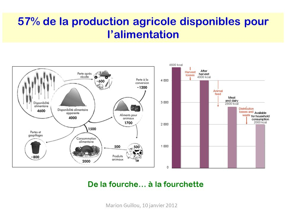 57% de la production agricole disponibles pour l'alimentation