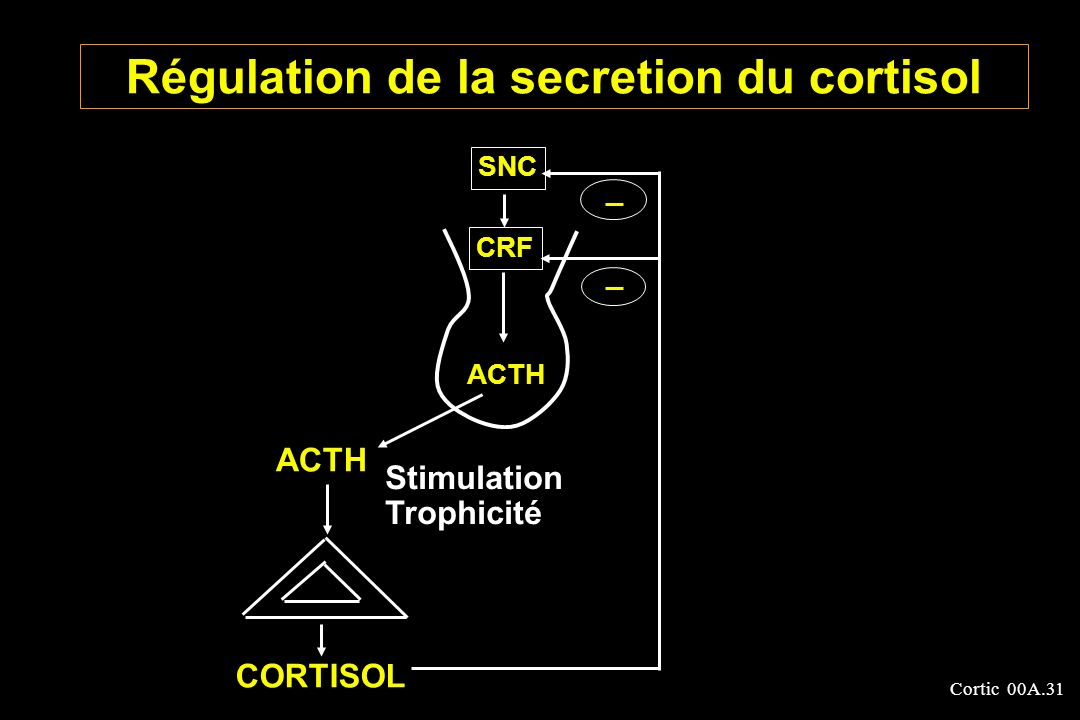 Régulation de la secretion du cortisol