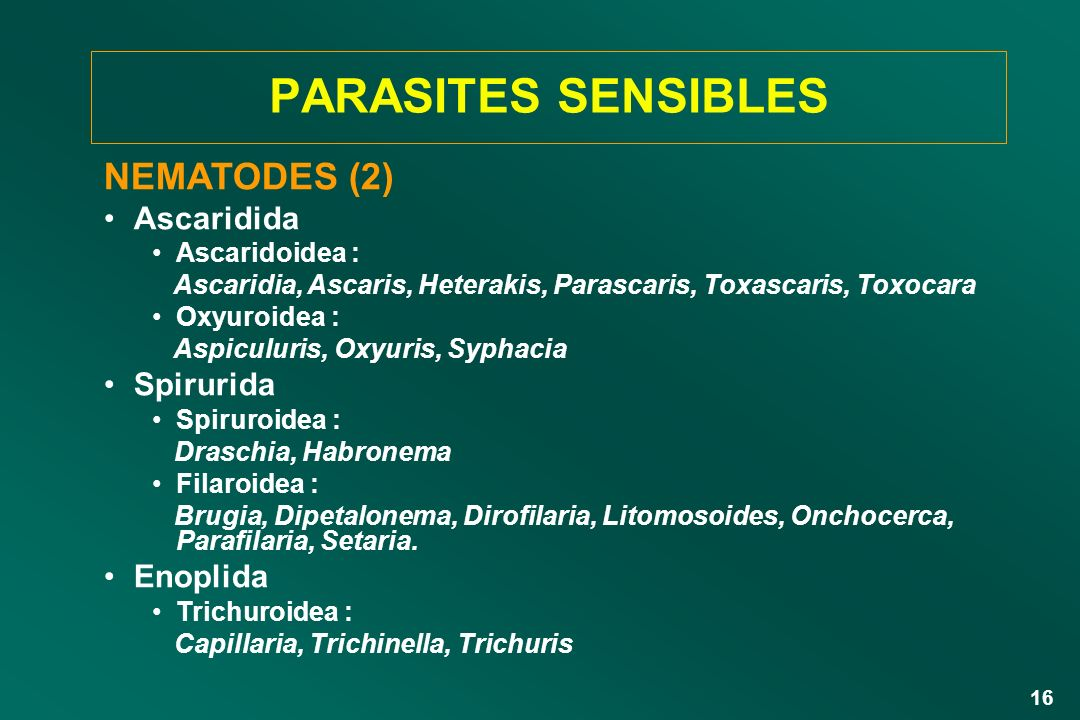 PARASITES SENSIBLES NEMATODES (2) Ascaridida Spirurida Enoplida