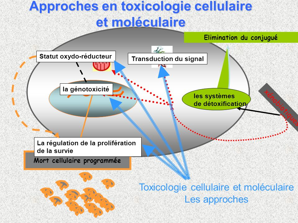 Approches en toxicologie cellulaire et moléculaire