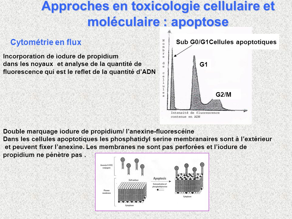 Approches en toxicologie cellulaire et moléculaire : apoptose