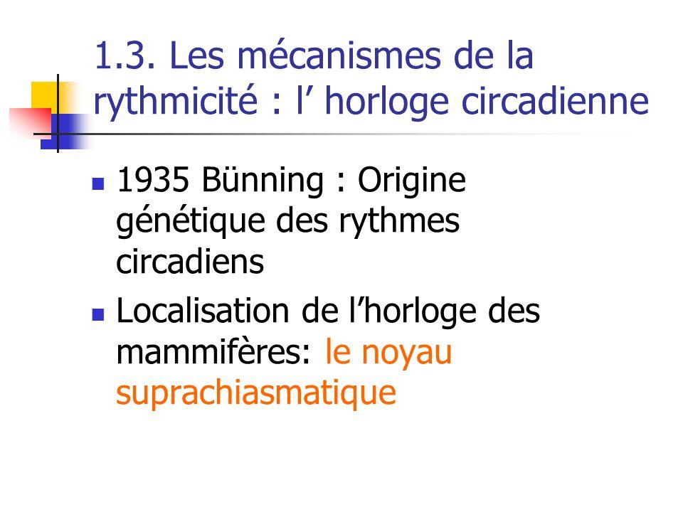 1.3. Les mécanismes de la rythmicité : l' horloge circadienne