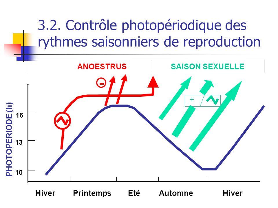 3.2. Contrôle photopériodique des rythmes saisonniers de reproduction