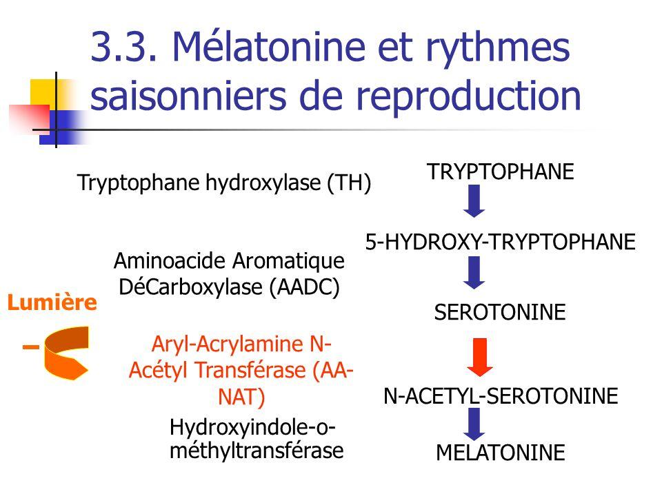 3.3. Mélatonine et rythmes saisonniers de reproduction