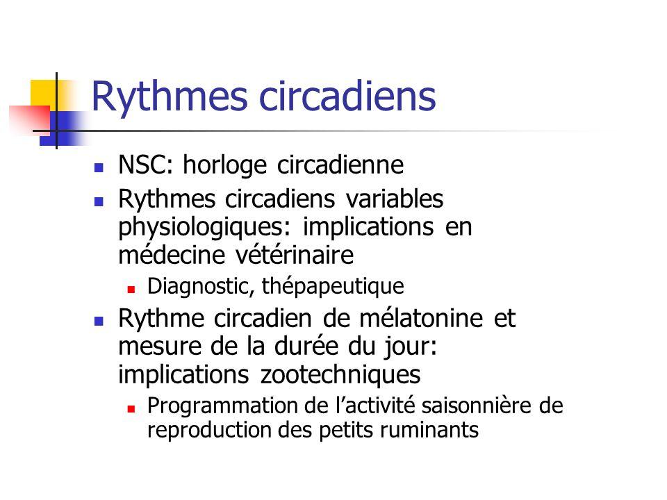 Rythmes circadiens NSC: horloge circadienne