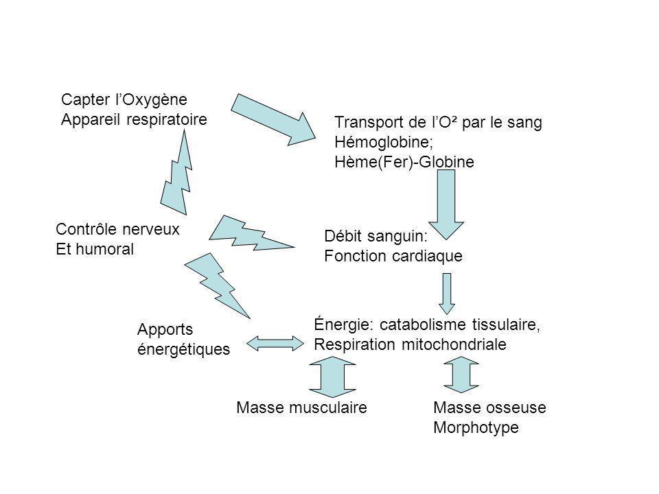 Capter l'Oxygène Appareil respiratoire. Transport de l'O² par le sang. Hémoglobine; Hème(Fer)-Globine.