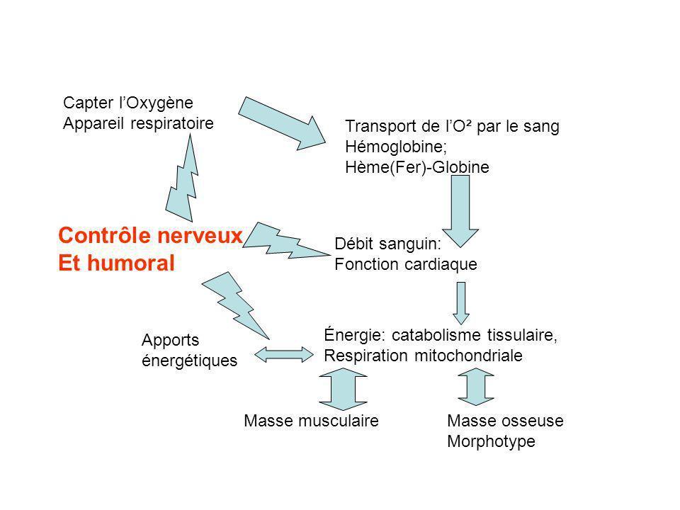 Contrôle nerveux Et humoral Capter l'Oxygène Appareil respiratoire