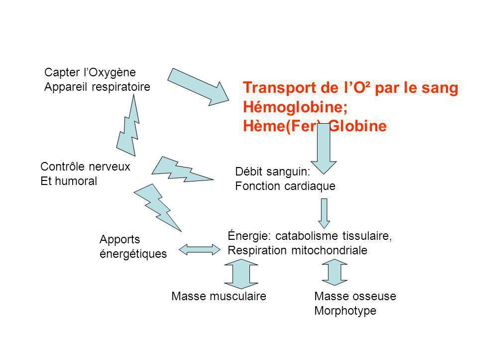 Transport de l'O² par le sang Hémoglobine; Hème(Fer)-Globine