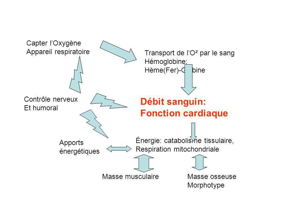 Débit sanguin: Fonction cardiaque Capter l'Oxygène