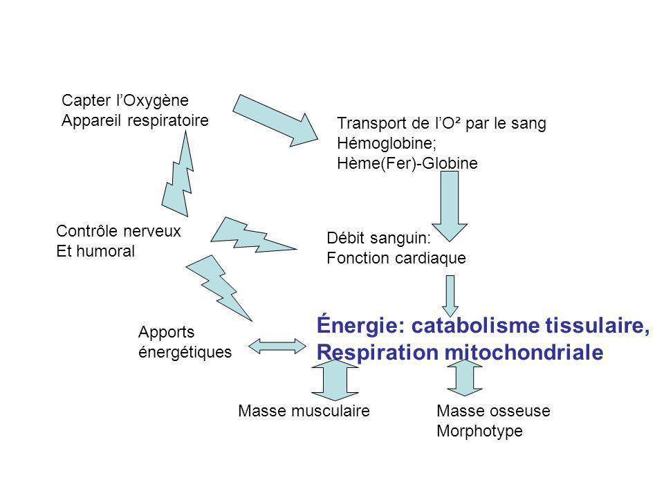 Énergie: catabolisme tissulaire, Respiration mitochondriale