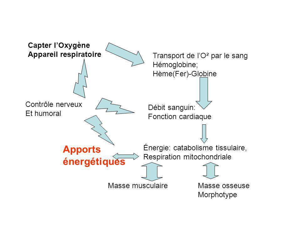 Apports énergétiques Capter l'Oxygène Appareil respiratoire