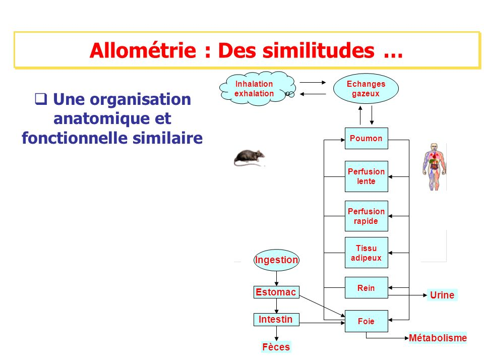 Allométrie : Des similitudes …