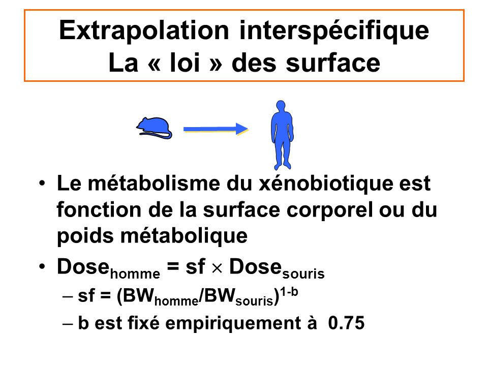 Extrapolation interspécifique La « loi » des surface